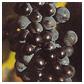 Le Pinot Noir d'Alsace